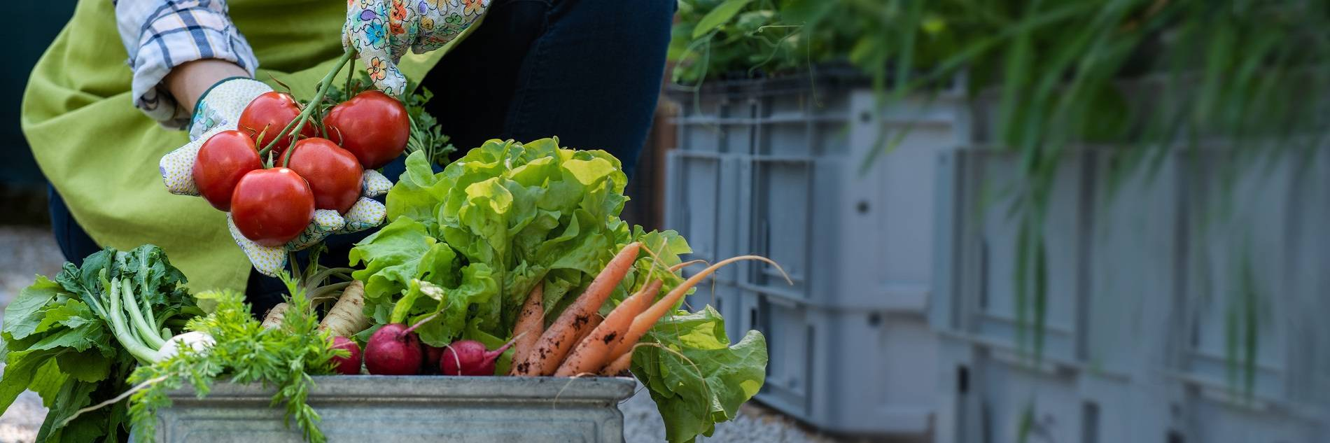 About The Organic Gardening Catalogue