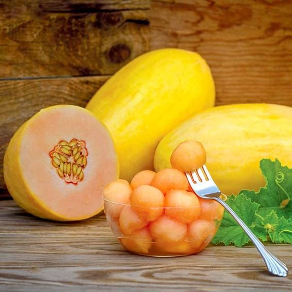 Melon Mangomel (3)