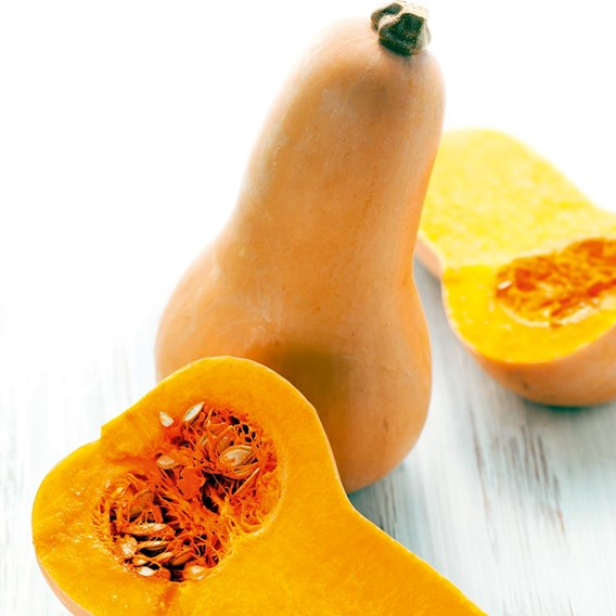 Butternut Squash Grafted Hunter (3)