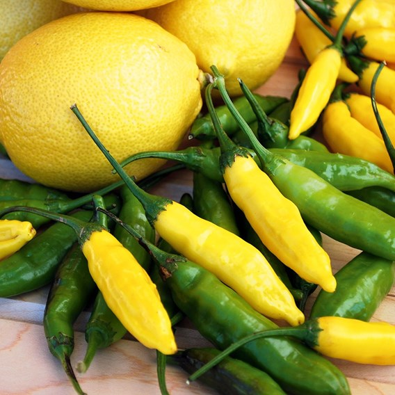 Pepper Peruvian Lemon Drop (3)