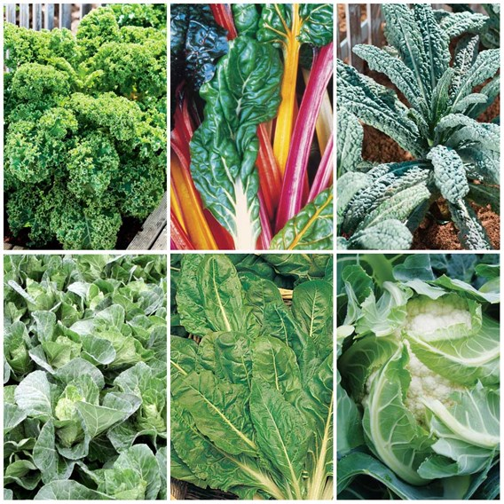 Keep Cropping Autumn Collection Veg - 36x9cm