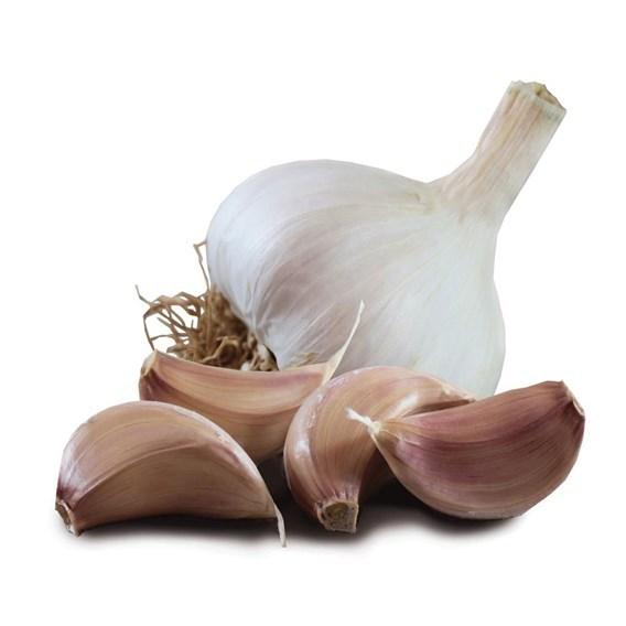 Garlic Tuscany Wight (6)
