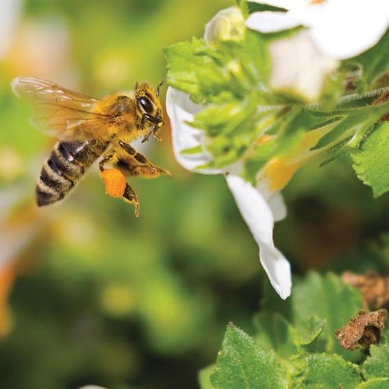 Honeybee Mix