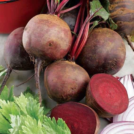 Beetroot Seeds - Boltardy Triple Pack 3 X 431519