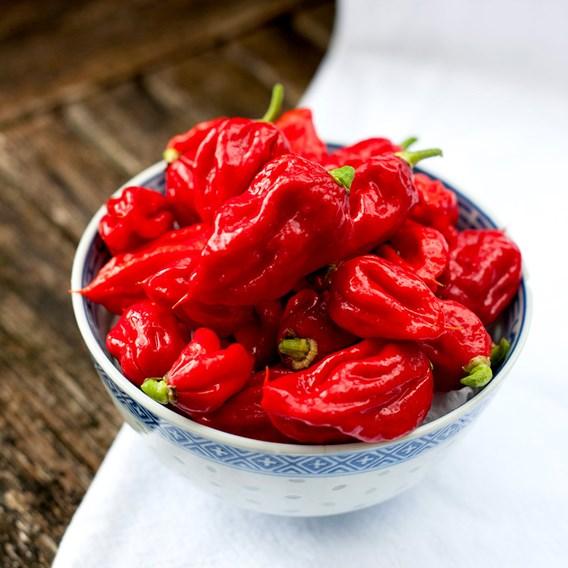 Pepper Chilli Seeds - Carolina Reaper
