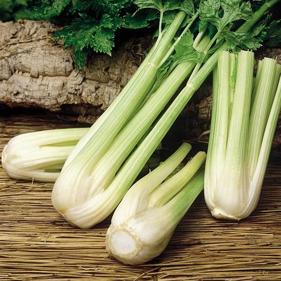 Celery Seeds - Golden Spartan