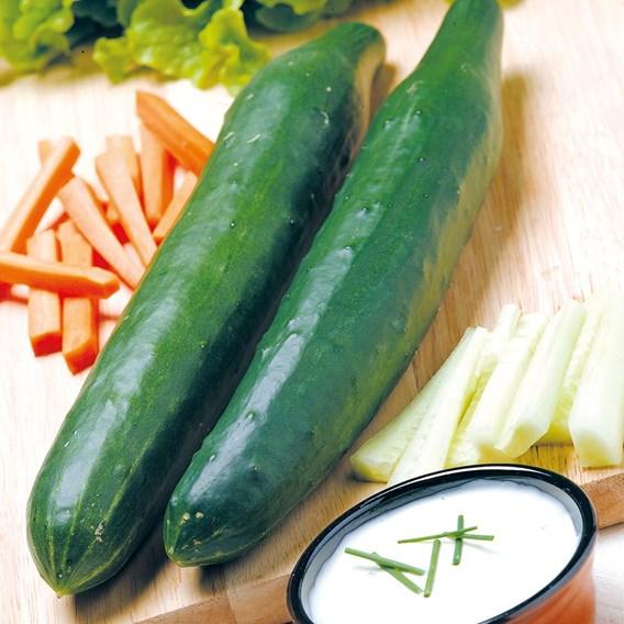 Cucumber Seeds - Telegraph Improved