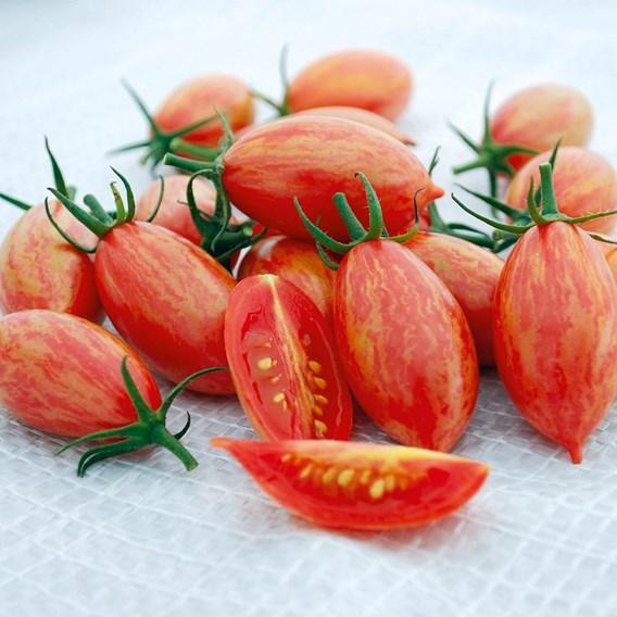 Tomato Artisan Pink Tiger