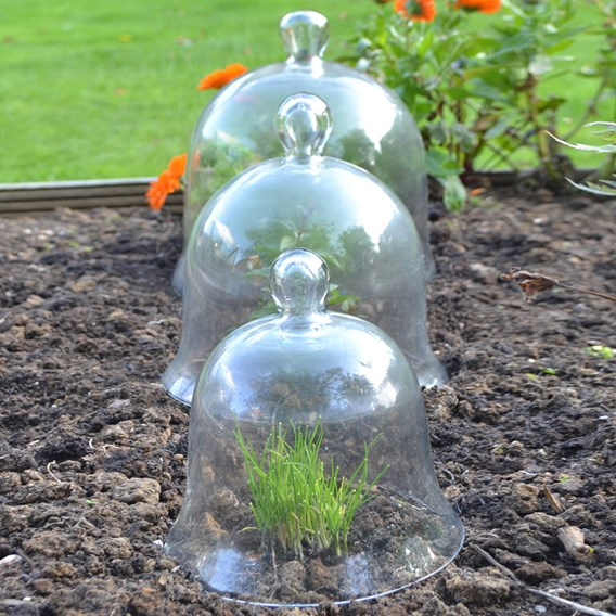 Bell Glass Cloche - Set of 3 (1 small, 1 medium, 1 Large)