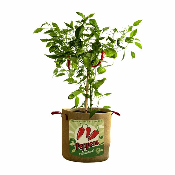 Vintage Peppers Grow Bag (Twin Pack)