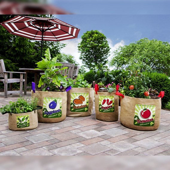 Vintage Eggplant Grow Bag (Twin Pack)