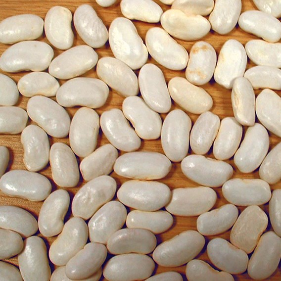Bean Drying Soissons Gros Blanc 'A Rames