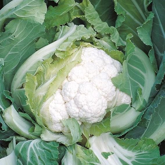Cauliflower Skywalker