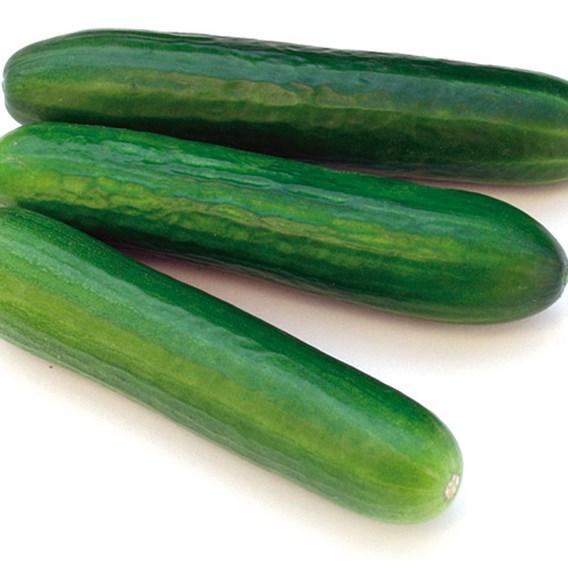 Cucumber Magnum F1