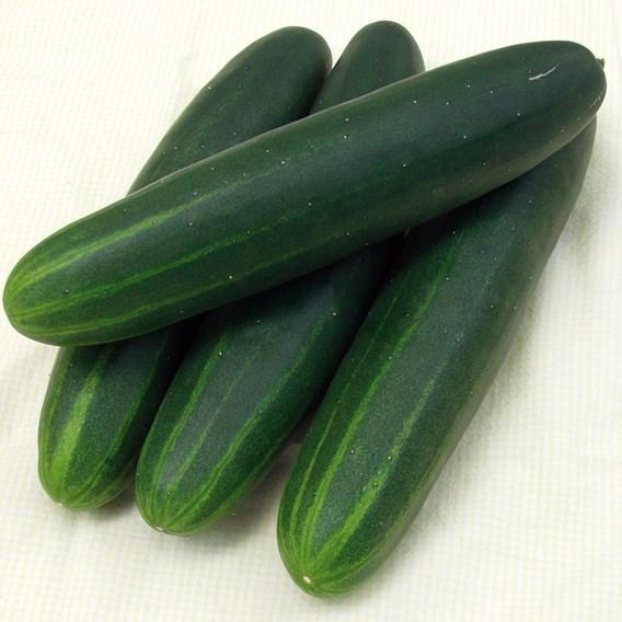 Cucumber Sonja