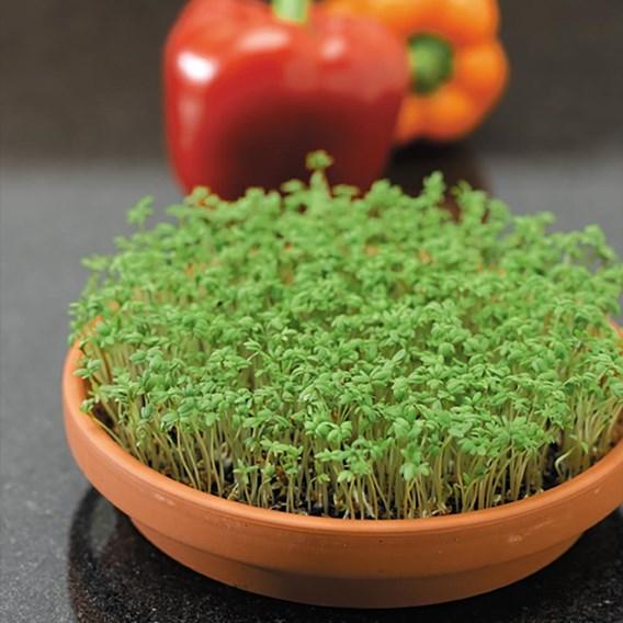 Herb Cress