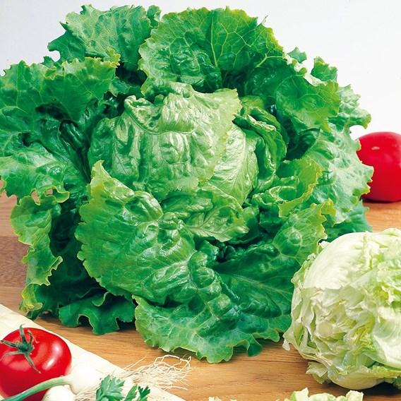 Lettuce Blonde De Paris