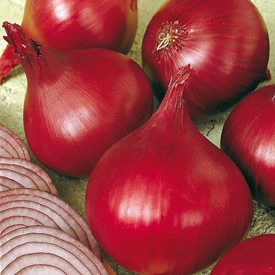 Onion Red Baron