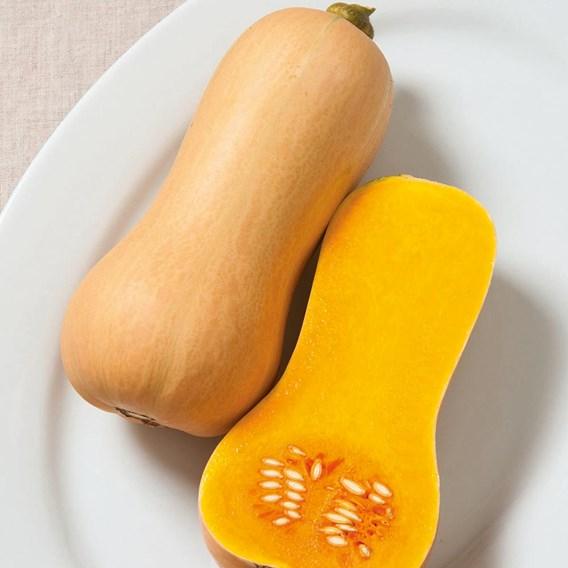 Squash & Pumpkin Butterscotch F1