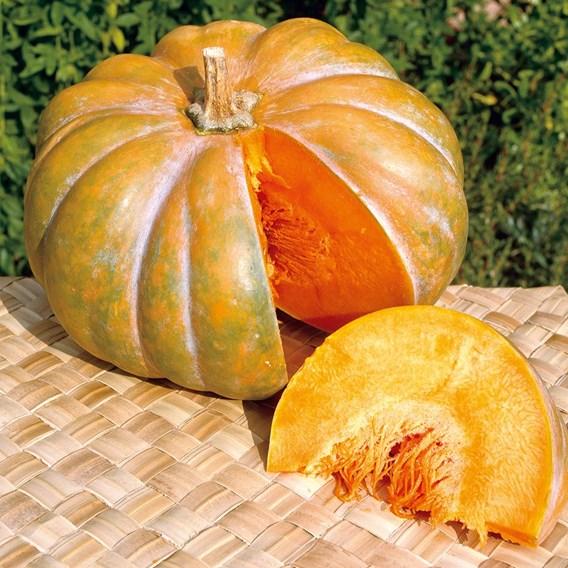 Squash & Pumpkin Moschata Muscade