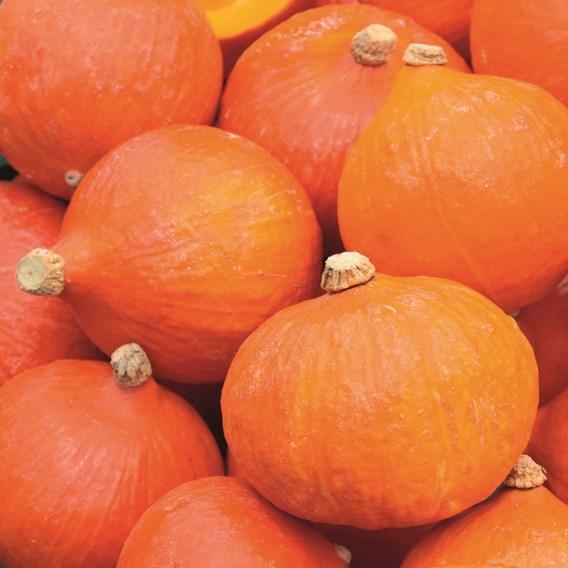 Squash & Pumpkin Uchiki Kuri