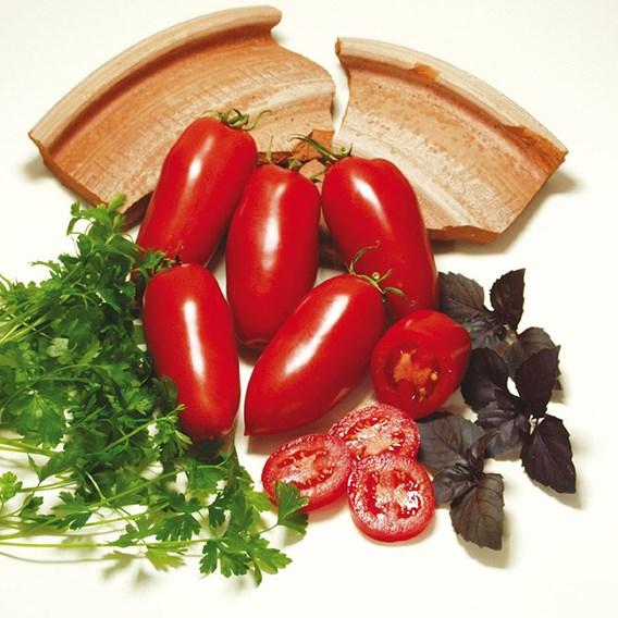 Tomato Agro F1