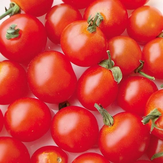 Tomato Ciliegia