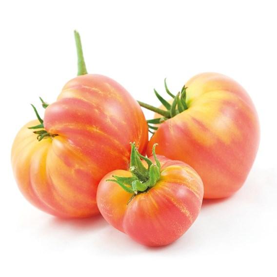Tomato Hillbilly