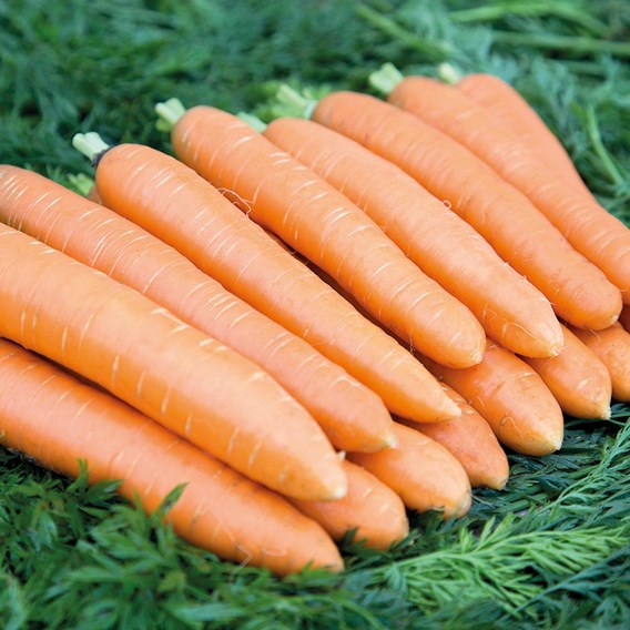Carrots Saver Package