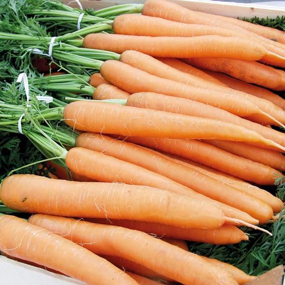 Carrot - Merida F1