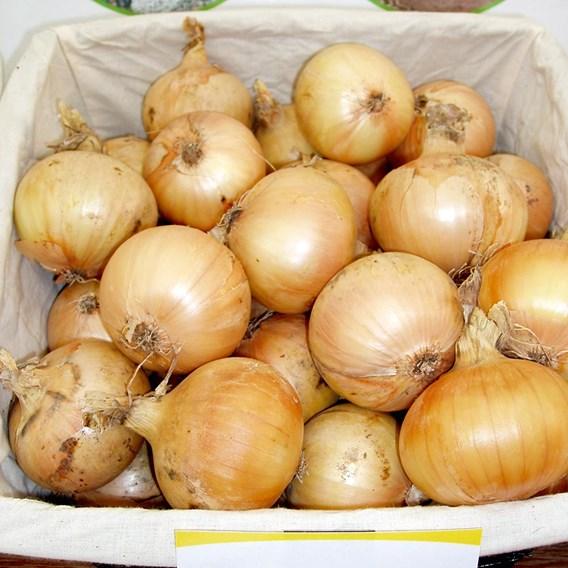 Onion Santero