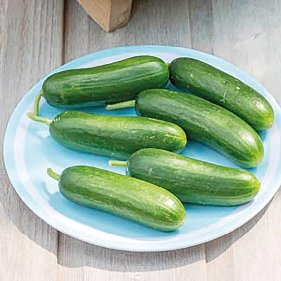 Organic - Cucumber SAVER