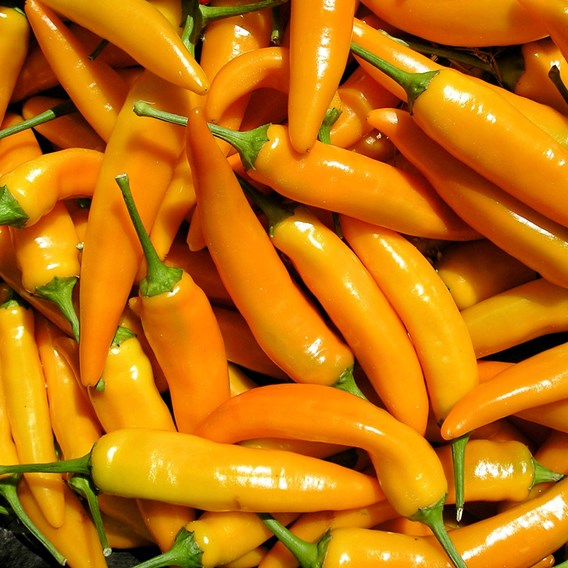 Sweet Pepper Seeds - Tequila Sunrise