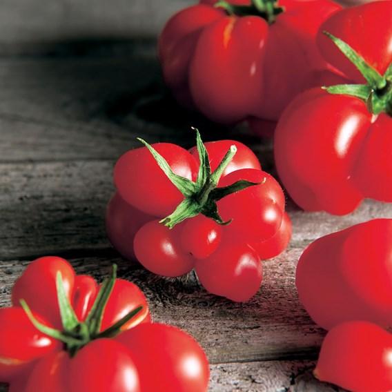Tomato Seeds - Reisetomate