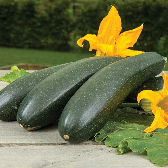 Courgette Seeds - Wave Climber