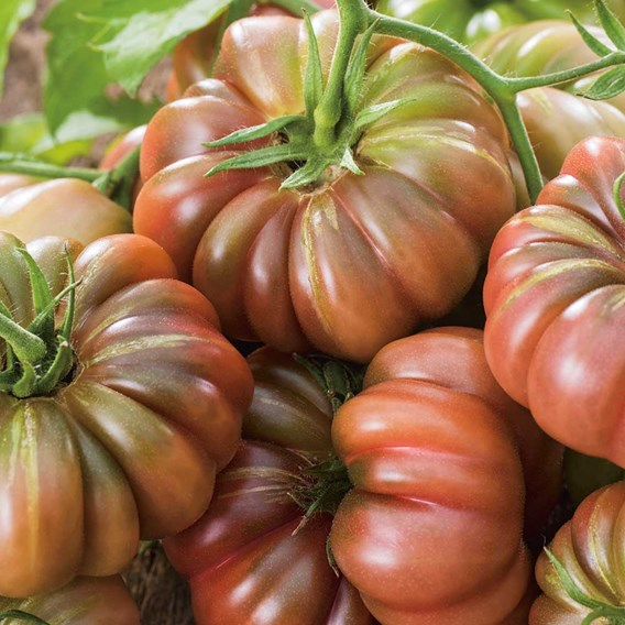 Tomato Seeds - Cherokee Purple