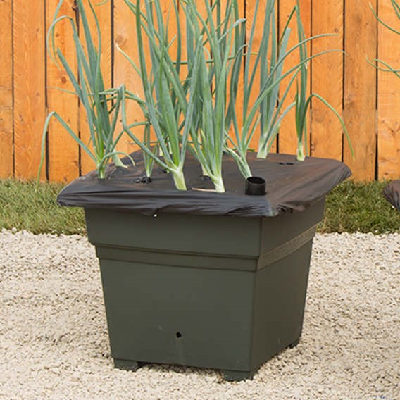 Earthbox Root And Veg Container Green