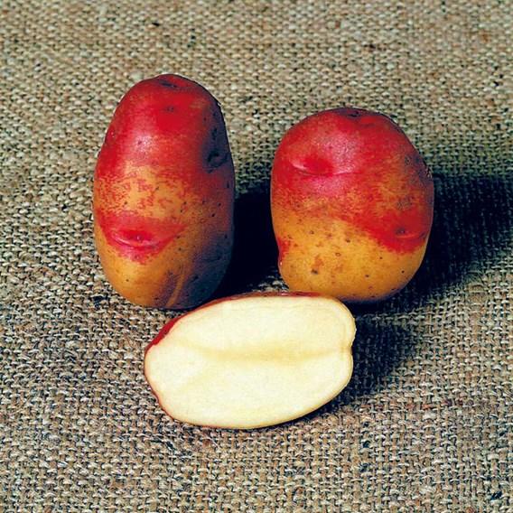 Seed Potatoes Organic Ambo 1kg
