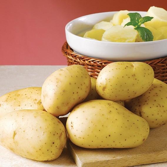 Seed Potatoes Vivaldi 1kg