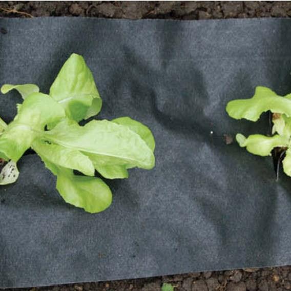 Slug And Weed Mat 180 X 50 Cm
