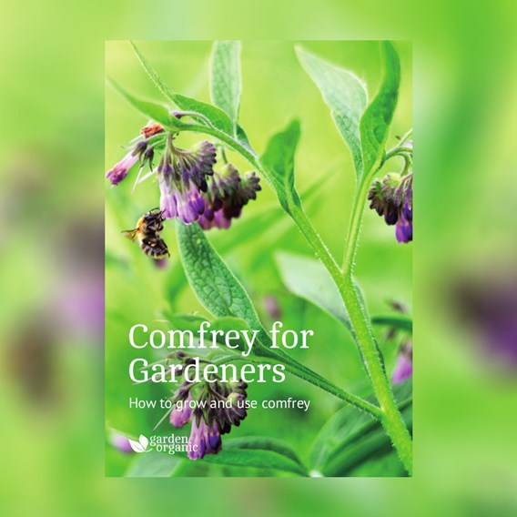 Step by Step Guide - Comfrey For Gardeners