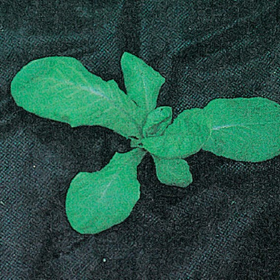 Permealay - Porous Mulch 10 X 1.6 M