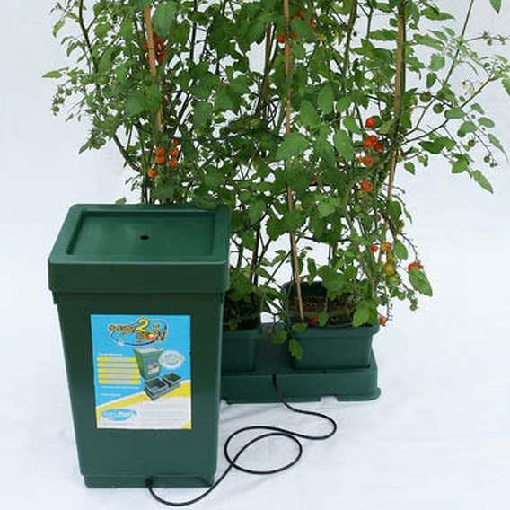 Easy 2 Grow Kit - Green