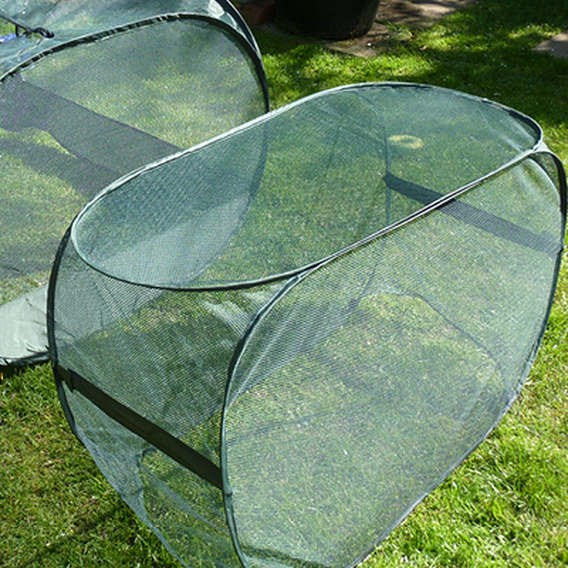 Pop Up Net Cloche  - 100 X 50 X 75 Cm - Gpn100-10