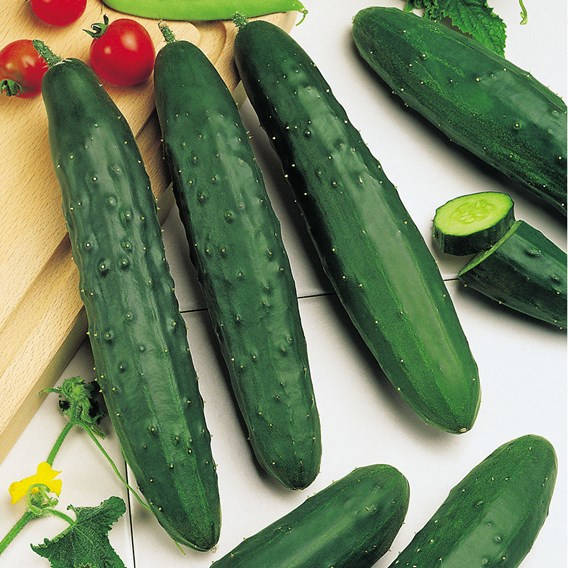 Cucumber Marketmore (5) Organic