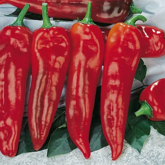 Sweet Pepper Long Red Marconi  (3) Organic