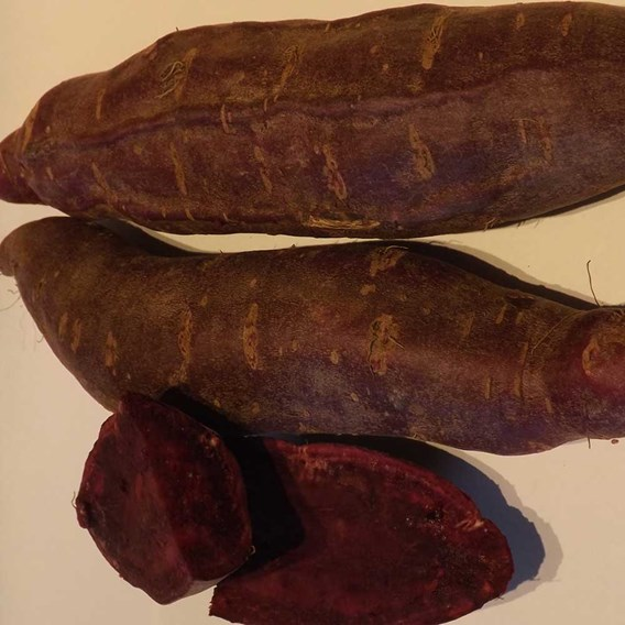 Sweet Potato Purple Molokai 5