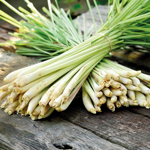 Lemon Grass  (3 ) Organic