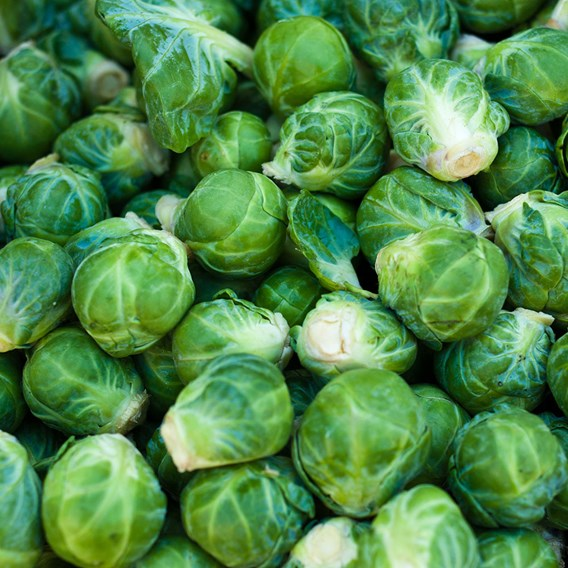 Brussels Sprout Evesham Special (10) Organic