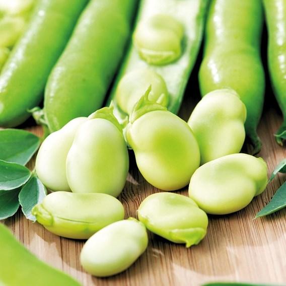 Broad Bean Seeds - Aquadulce Claudia